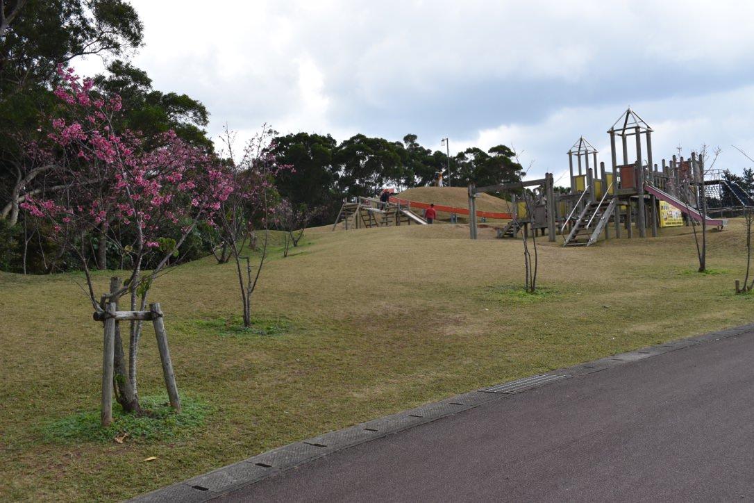 『2017沖繩』孩子們溜滑梯、大人們賞櫻花(人煙稀少的好地點)-八重岳桜の森公園