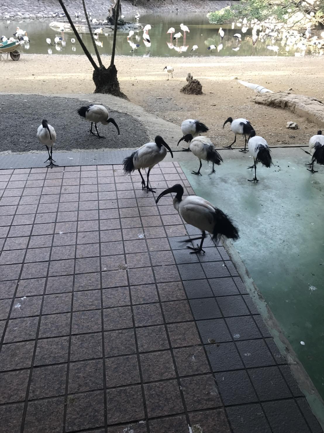 『2017沖繩』有趣、新鮮、近距離接觸動物的有趣-名護動植物園